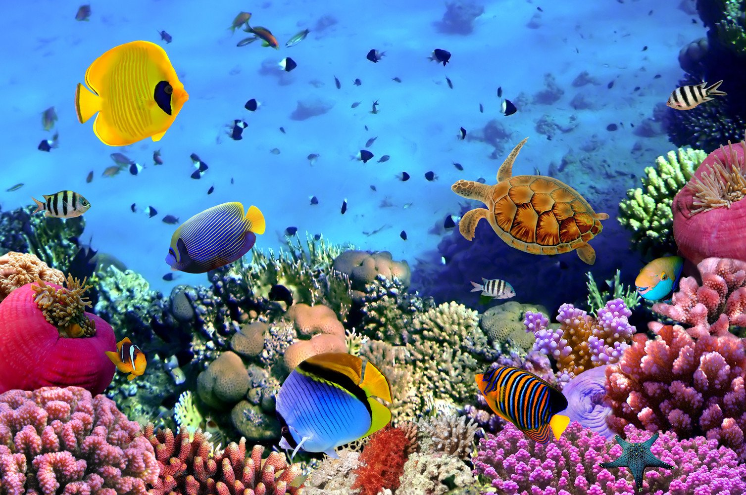 CHOIS Custom Film CF3057 Animal Fishes Tortoise Coral Reefs Glass Window Frosted 3' W by 2' H