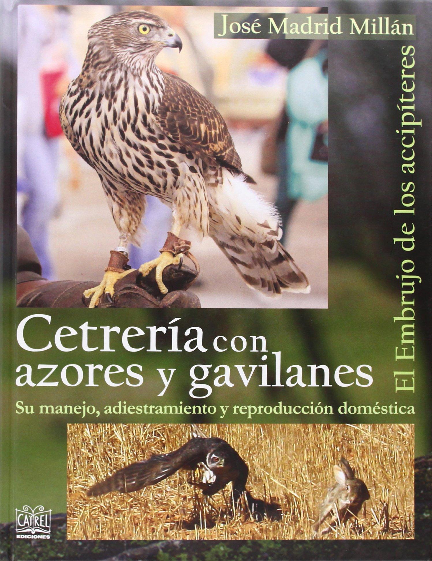 Cetrería con azores y gavilanes: El embrujo de los accipíteres