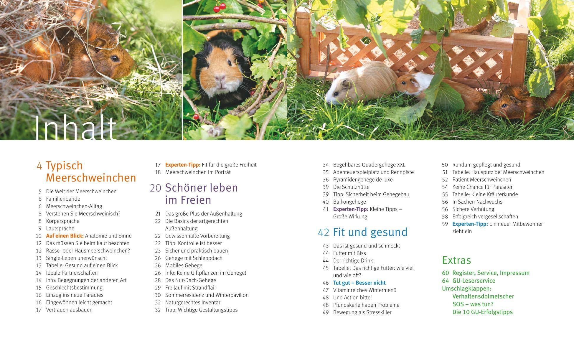 Meerschweinchen im Außengehege  Schmidt, Esther Amazon.de Bücher