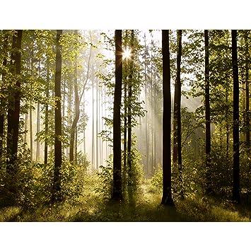 Fototapeten Wald Landschaft 352 x 250 cm Vlies Wand Tapete ...