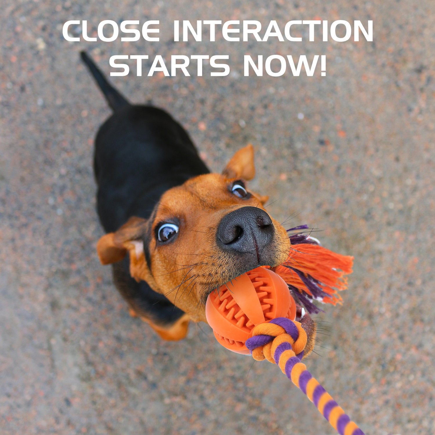 Teeth Cleaning Knotted Play Ball Toy for Small Dog Durable Non-Toxic Rubber Treat Holder Ball Chew Toy with Tough Chain Cotton Rope Orange Pawaboo Dog Ball Toy with Dental Chew Rope