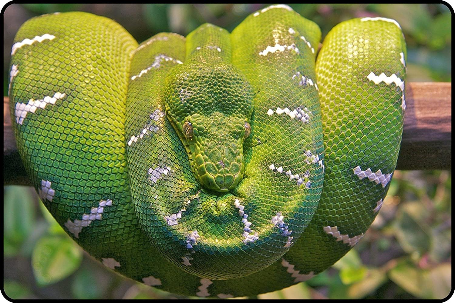 Amazon.com : L.Z.Y Portable with Extended emerald tree boa branch ...