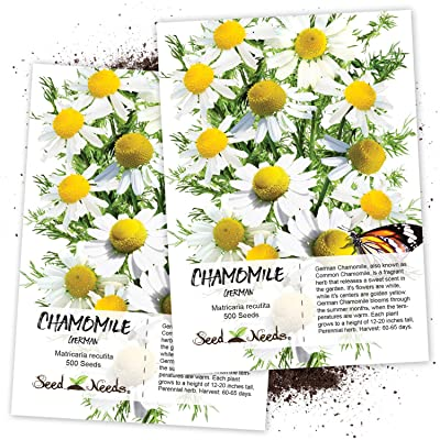 Seed Needs, German Chamomile (Matricaria recutita) Twin Pack of 500 Seeds Each Non-GMO : Herb Plants : Garden & Outdoor