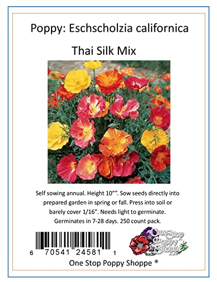 Amazon 250 california poppy flower seeds thai silk poppies mix 250 california poppy flower seeds thai silk poppies mix one stop poppy shoppe mightylinksfo