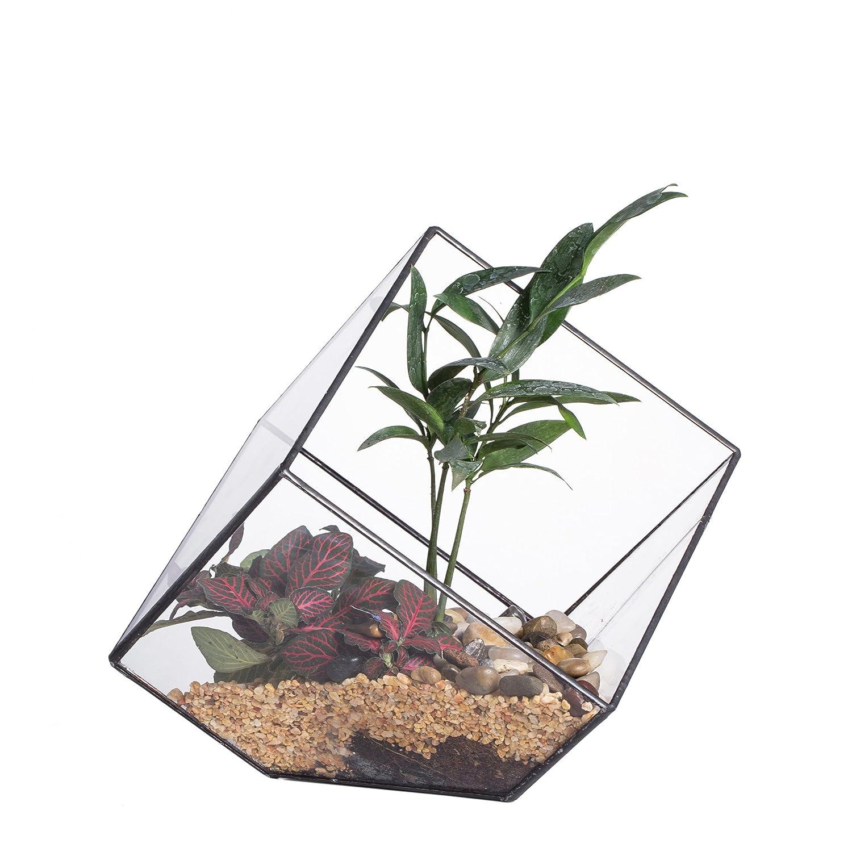 Geometric Terrarium ガラス ポリゴン ハング 傾斜 15 cmの正方形  キューブ 幾何 ジオ テラリウム 植木鉢 多肉植物 ミニ景観 盆栽 プランター モス 苔 コケ モストレ サボテン ファーン フラワーポット 西洋風 花器 B019YU8YM2