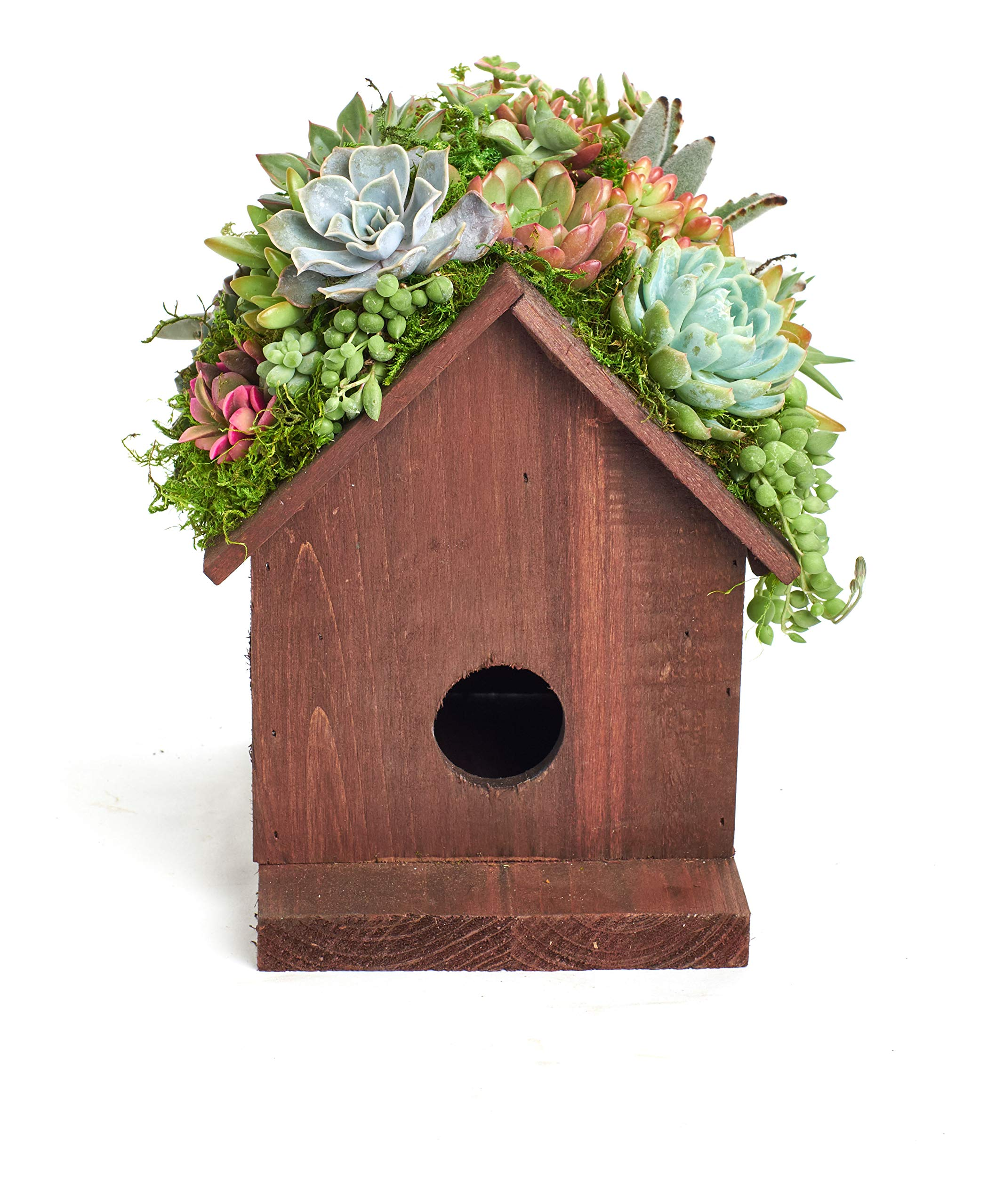 Shop Succulents BIRDHS-20-SUC-KIT Living Succulent Kit Birdhouse Planter by Shop Succulents (Image #2)
