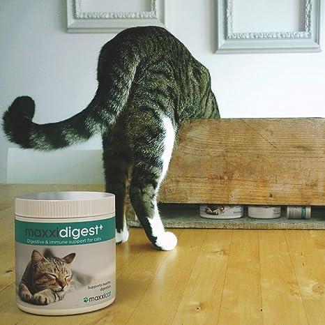 maxxicat – maxxidigest+ Probióticos, prebióticos y enzimas digestivas para Gatos - Ayuda Avanzada a la digestión Felina & al Sistema inmunológico - Sin Polvo OGM - Polvos 90 g: Amazon.es: Productos para mascotas
