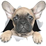 Winston & Bear 3D Dog Stickers - 2 Pack - Cute French Bulldog Sticker for Wall, Fridge, Toilet and More - Retail Packaged