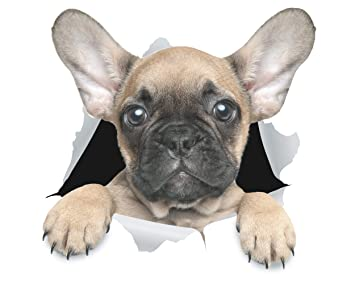 Winston & Bear Stickers 3D perro lindo Bulldog Francés - Pack 2 - adhesivo para la