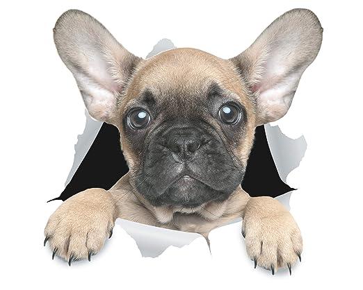 Winston & Bear Stickers 3D perro lindo Bulldog Francés - Pack 2 ...