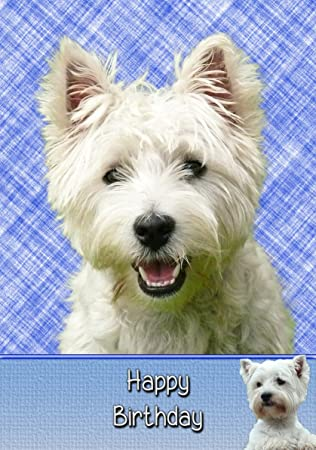 Westiewest Highland Terrier Birthday Card 8x55 Mix Match On 8
