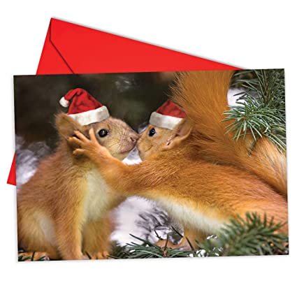 Christmas Notecard.Box Set Of 12 Holiday Animal Smackers Christmas Notecard Featuring Sweet And Adorable Squirrels Wearing Santa S Hats Showing Affection For Each Other