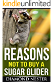 Reasons Not to Buy A Sugar Glider: A short guide on what to expect when purchasing one of these amazing marsupials.