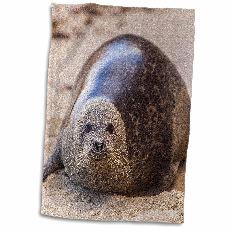 3D Rose La Jolla Cove-San Diego-Harbor Seal On The Beach Hand Towel 15 x 22