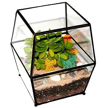 Kit de terrarium à bricoler avec cactus et succulent, Guide ...