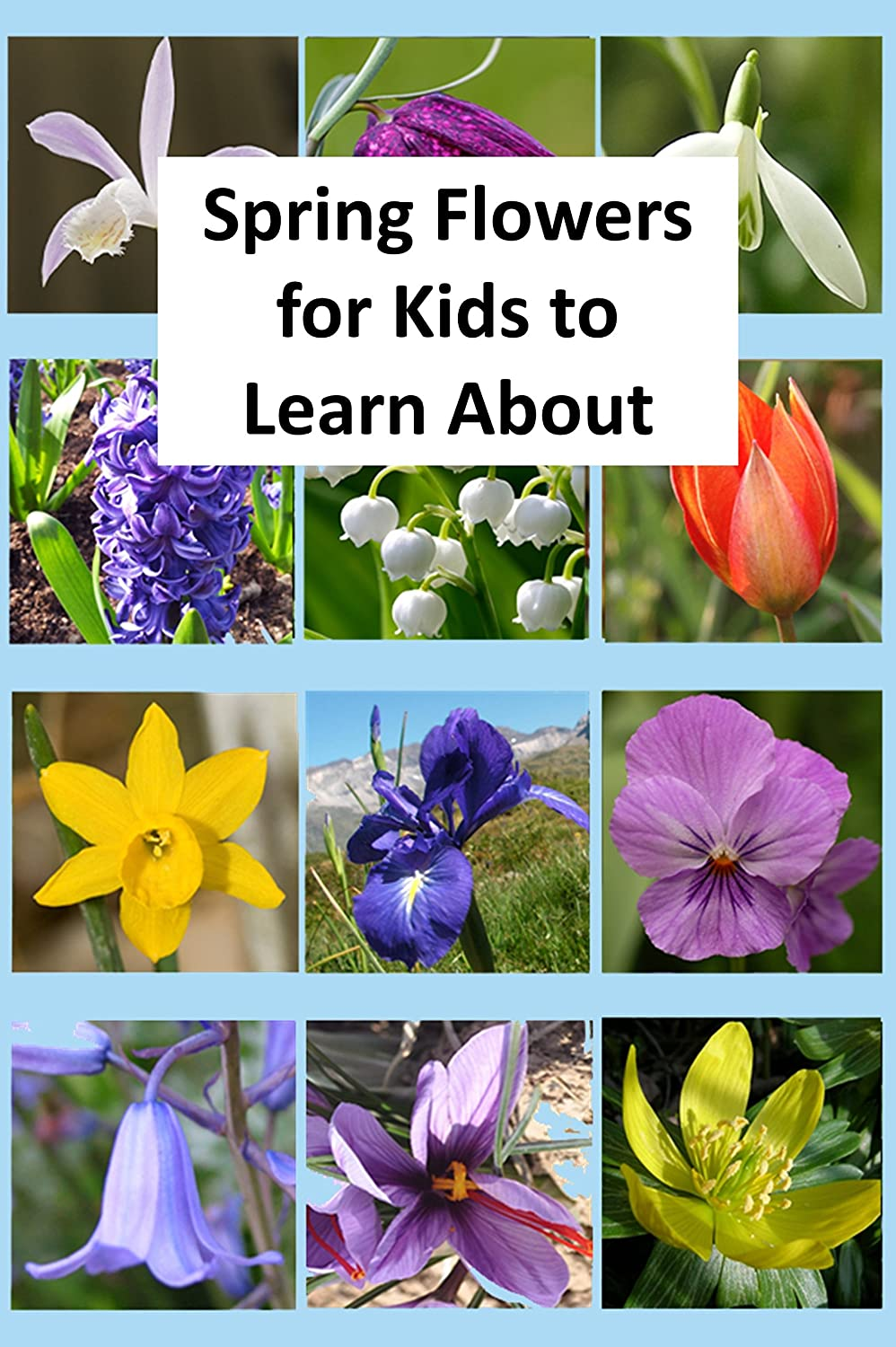 Spring Flowers For Kids To Learn About Kindle Edition By Rich