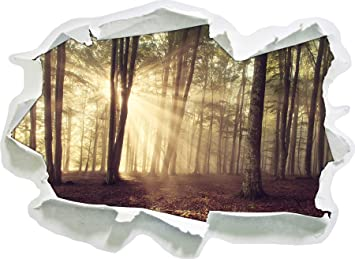 Waldlichtung Im Sonnenschein Papier 3d Wandsticker Format 62x45 Cm