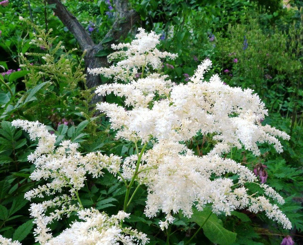 Summer Flowering Plants Amazon