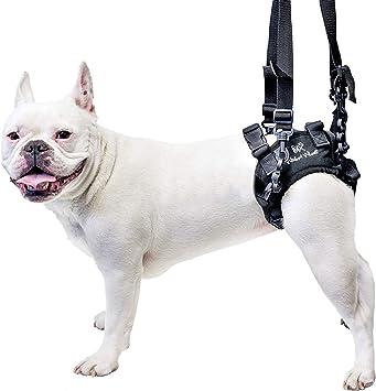 Arnés patas posteriores perro: Amazon.es: Productos para mascotas