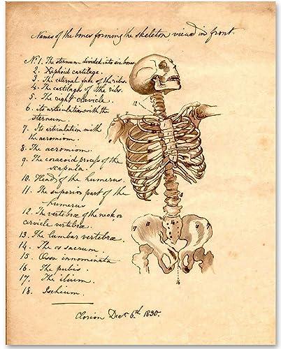 Amazon.com: Skeleton - Names of Bones - 11x14 Unframed Art Print ...