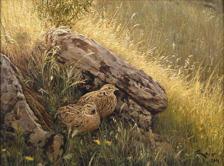 Codornices - Lámina sobre lienzo. Cuadro de Codorniz Comun. 40 x 30 cms. Cuadros de animales, aves, pájaros, caza