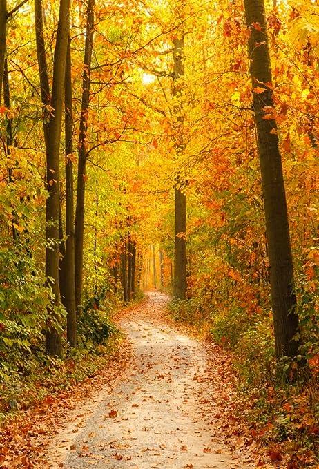 amazon com aofoto 6x8ft fall scenery backdrops park path