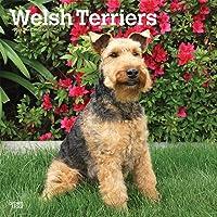 Welsh Terrier 2019 - 18-Monatskalender mit freier DogDays-App (Wall-Kalender)