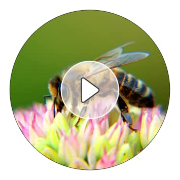 bumblebee notification sound