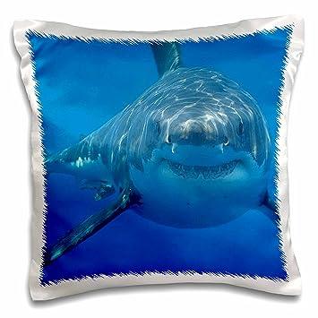 67474408b3be Amazon.com  3D Rose pc 108355 1 Underwater White Shark  Home   Kitchen