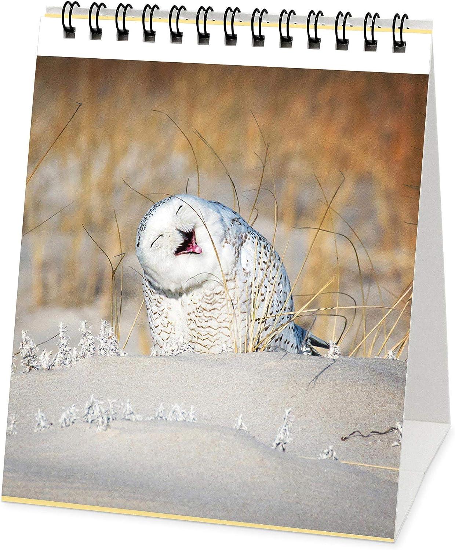 12X14.5 cm Legami Calendario 2021 da Tavolo OWLS