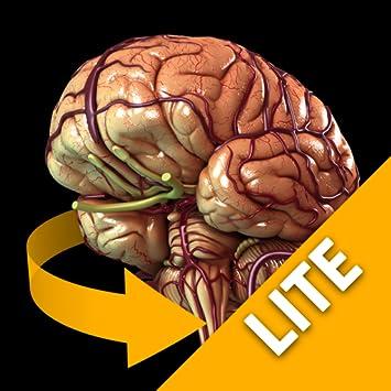 Amazon Brain 3d Atlas Of Anatomy Lite Version Appstore For