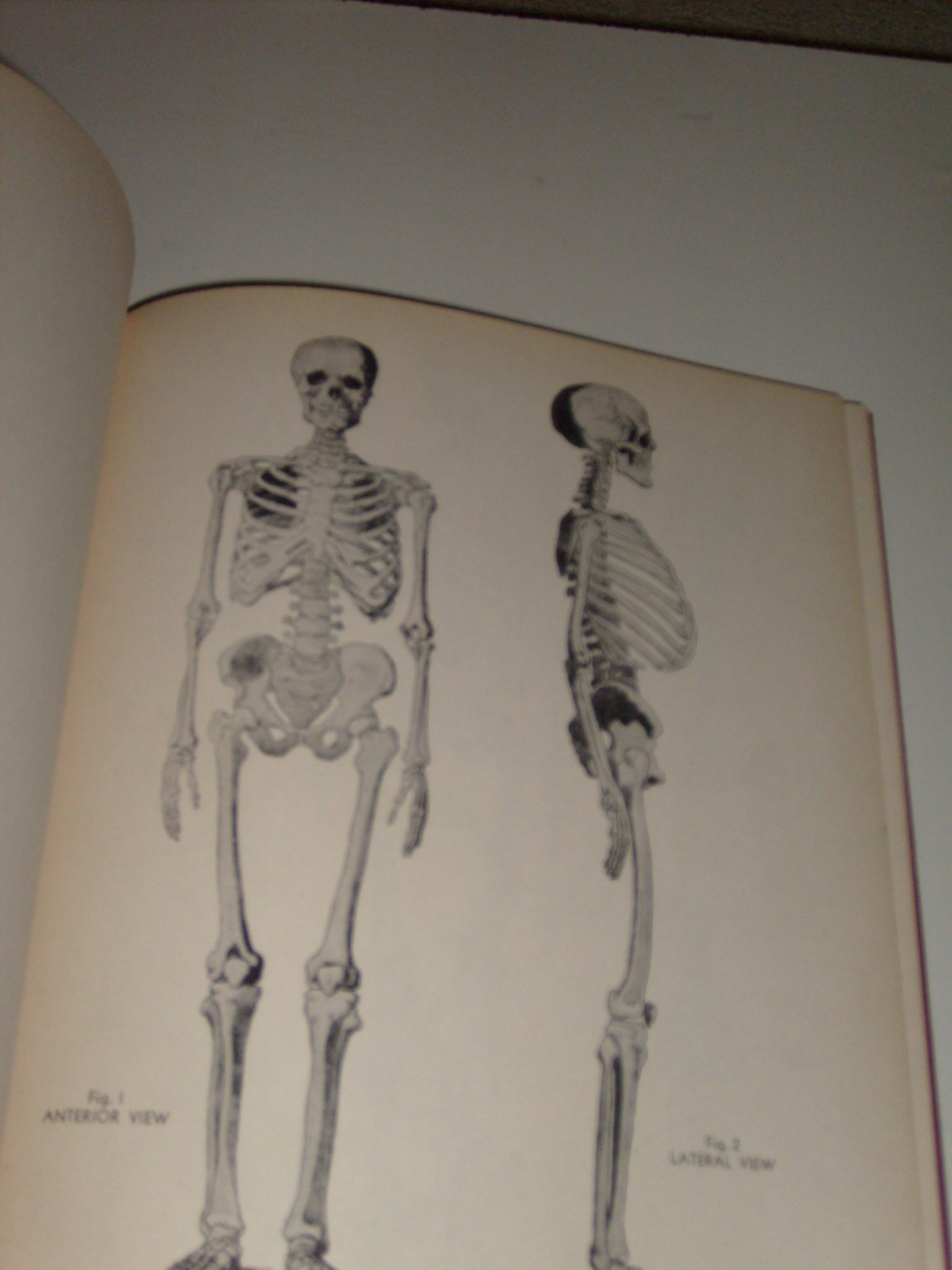 An Atlas Of Anatomy For Artists Revised By Professor Dr M
