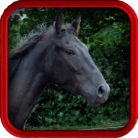Equine Vet for Horse Owners