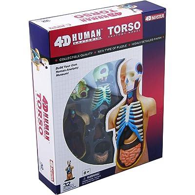 4D Vision Human Anatomy Torso Model: Toys & Games