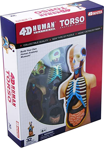 Amazon 4d Vision Human Anatomy Torso Model Toys Games