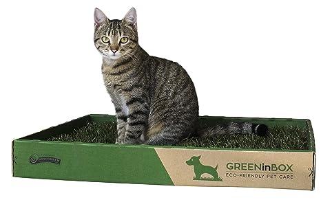 GreeninBox Special Cat - Arenero para gatos con un estrato ...