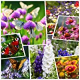 All Annual Big Color Wildflower Seed Mix - Variety (100% Pure Live Seed) Non-GMO Seeds Bulk Package of 50,000 Seeds…