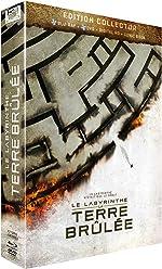 Le Labyrinthe : La Terre Brûlée [Combo Collector Blu-ray + DVD]