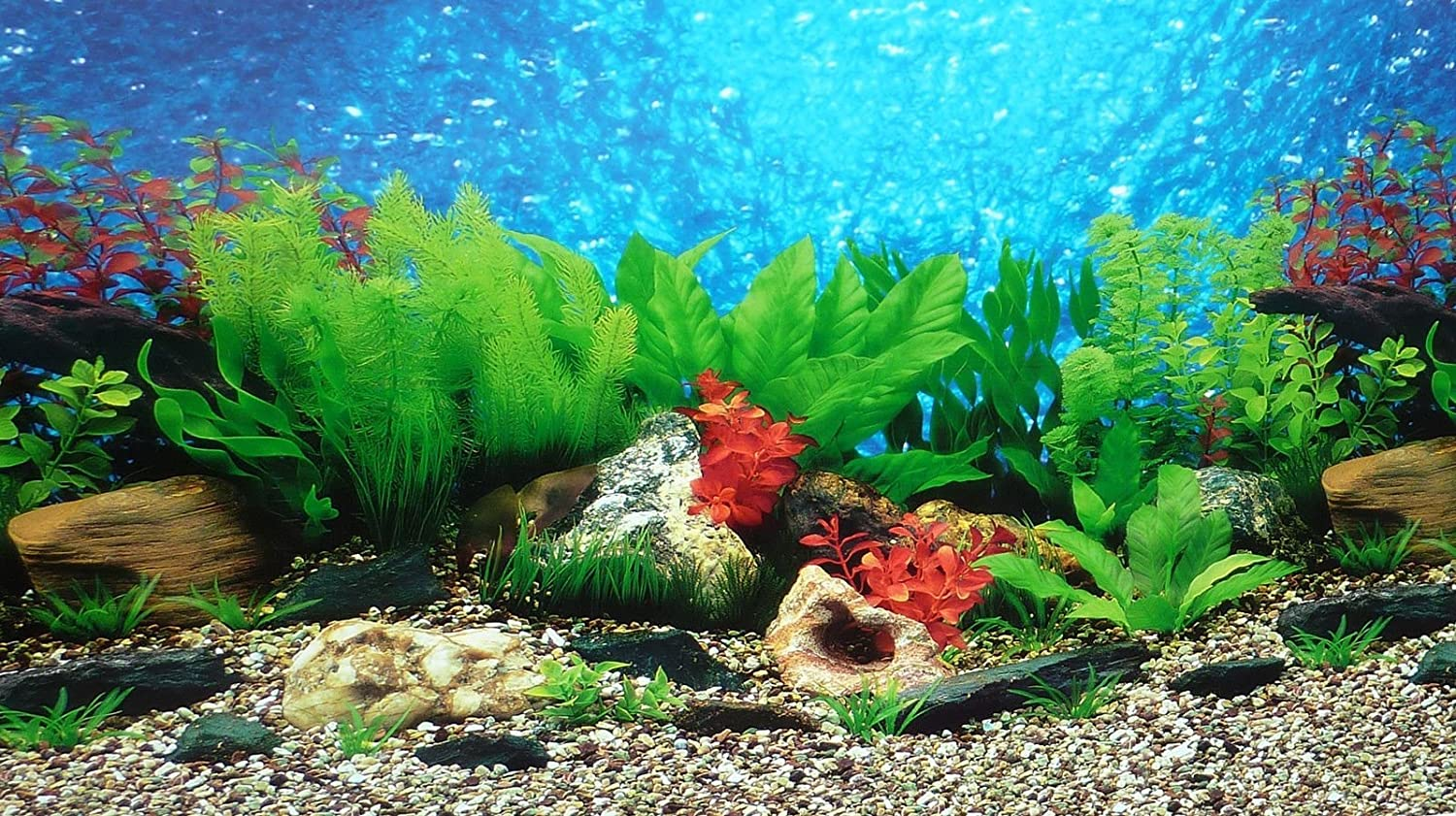 Amazon.com: 9088 20 x 48 Fish Tank Background 2 Sided River Bed ...