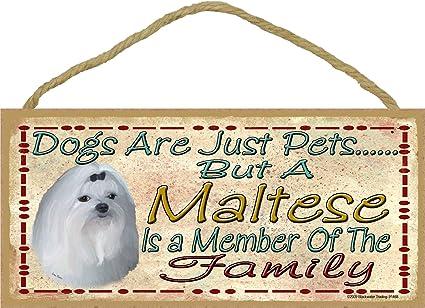 Cani Sono Solo Pets Ma Un Cane Maltese è Parte Della Famiglia Targa