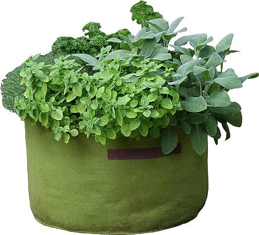 Tierra Garden 50-VIG14 Haxnicks Vigoroot Herb Planter: Amazon.es: Jardín