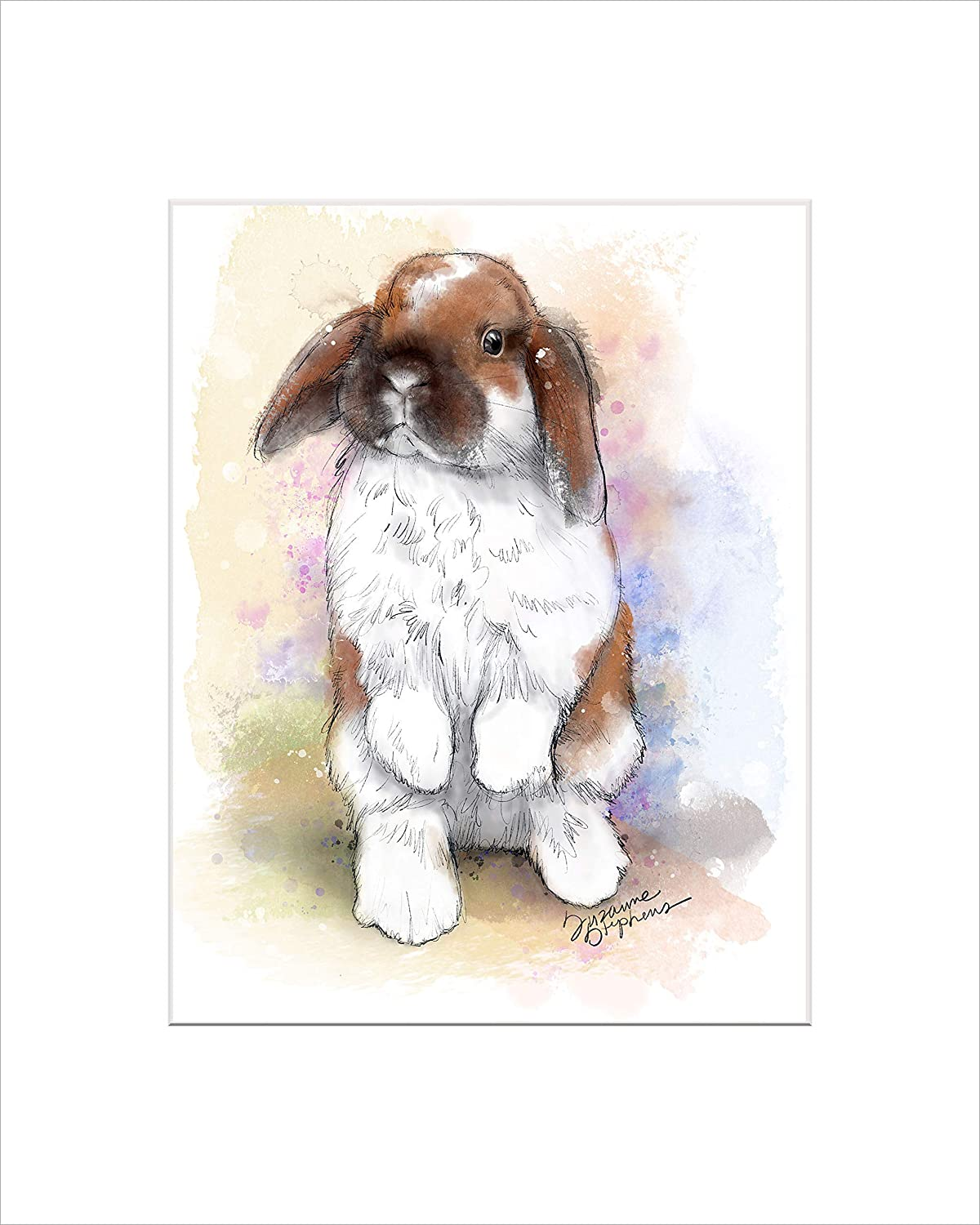 Holland Lop Bunny Rabbit Gift Print of Art by Suzanne Stephens with Size &  Mat Options