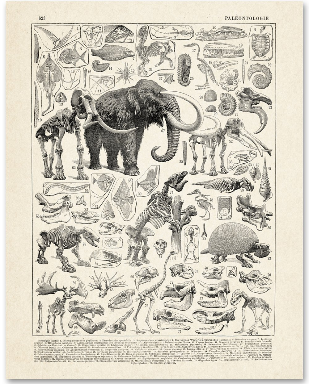 Paleontology - 11x14 Unframed Art Print - Great Gift for Dinosaur Lovers And Child's Room Decor