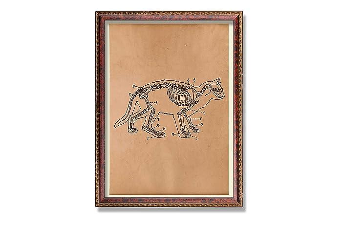 Amazon.com: Cat anatomy print Vintage skeleton art Anatomical poster ...