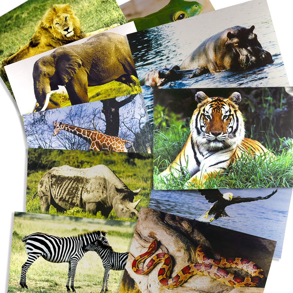 Stages Learning Materials Toddler Education Wild Animal Posters for Class Real Photo Decor for Preschool Bulletin Boards & Circle Time 9 Large Picture Cards