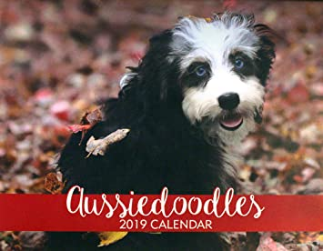 2019 Aussiedoodle Calendar