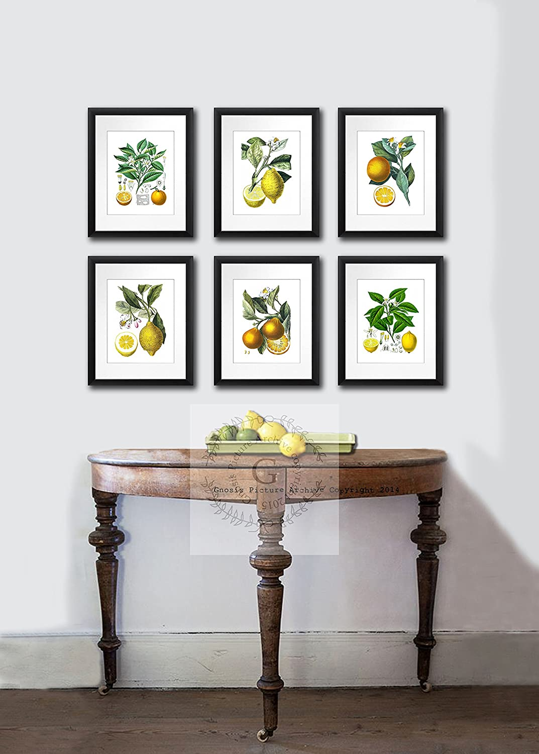 Amazon.com: Kitchen Art Decor Set Of 6 Unframed Lemon Orange Fruit Vintage  Botanical Reproduction Art Prints: Posters U0026 Prints