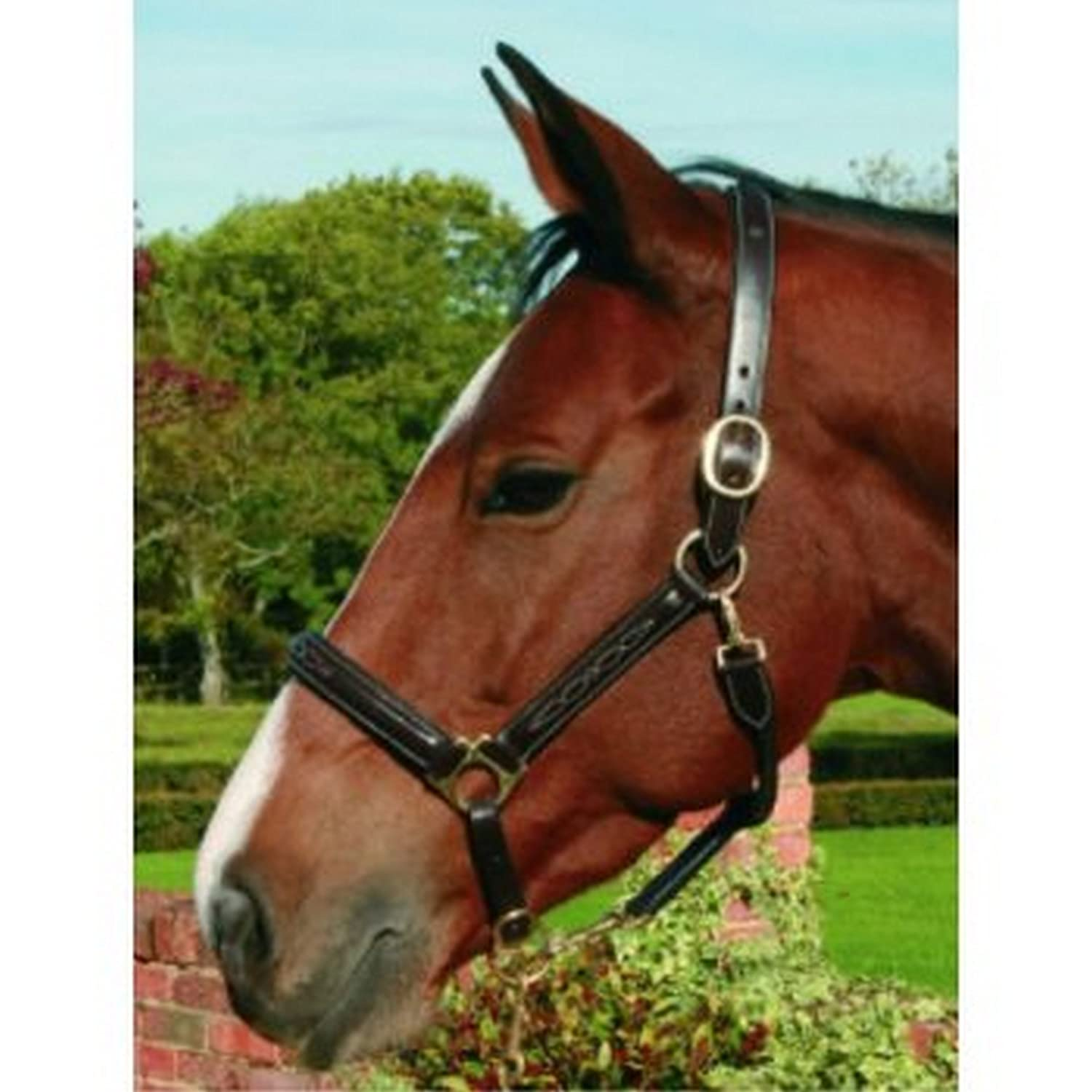 Black UK Size  Full Black UK Size  Full Mark Todd Fancy Stitch Raised Leather Headcollar (UK Size  Full) (Black)