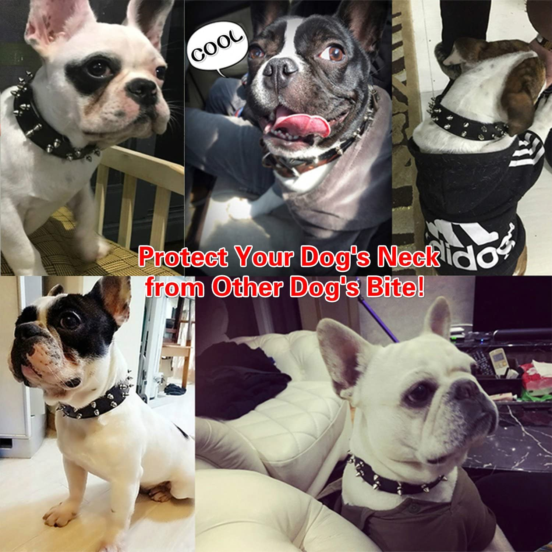 Stiletto Vero Cuoio French Bulldog Frenchie Handmade Dog Collar