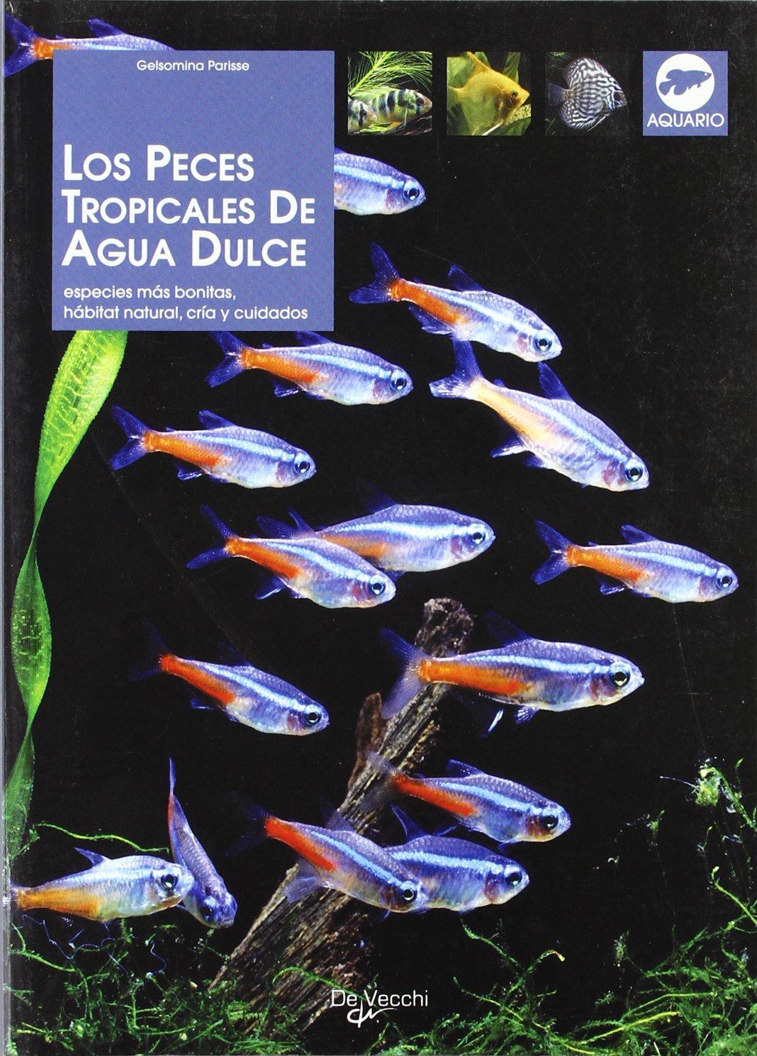 Los peces tropicales de agua dulce (Animales): Amazon.es: Gelsomina Parisse: Libros